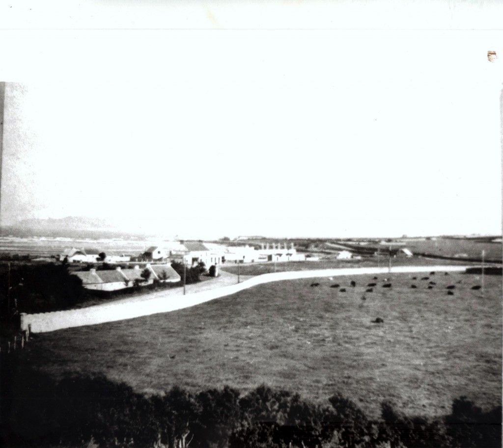 rook and green, Portrane. Circa 1950's