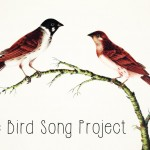 Bird Song project Image